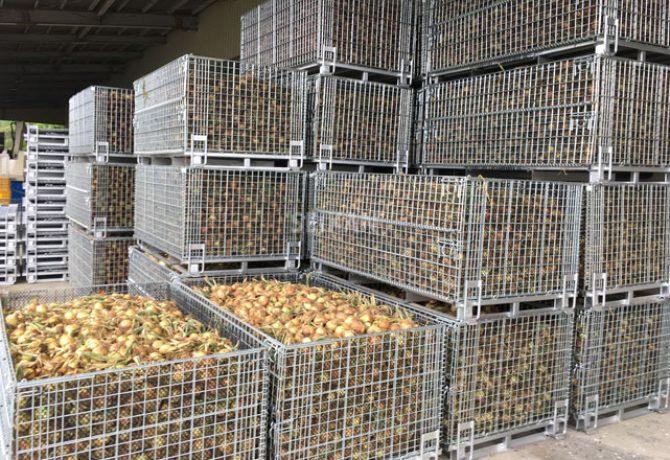 玉葱機械収穫 鉄コンテナ 乾燥 メッシュボックスパレット