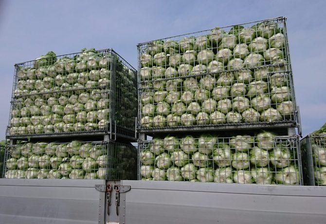 白菜輸送用メッシュコンテナ セイカン 鉄コンテナ