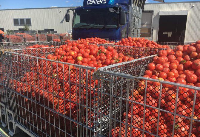 トマト用鉄コンテナ セイカン