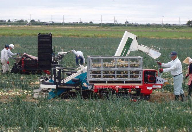 玉葱収穫 鉄コンテナ スチールコンテナ